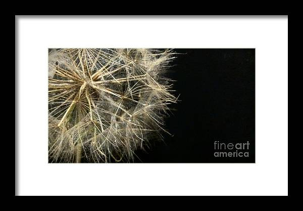 Dandelion Framed Print featuring the photograph Dandelion Nineteen by LKB Art and Photography