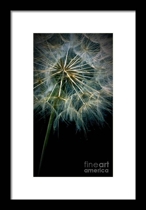 Dandelion Framed Print featuring the photograph Dandelion Thirty Eight by LKB Art and Photography
