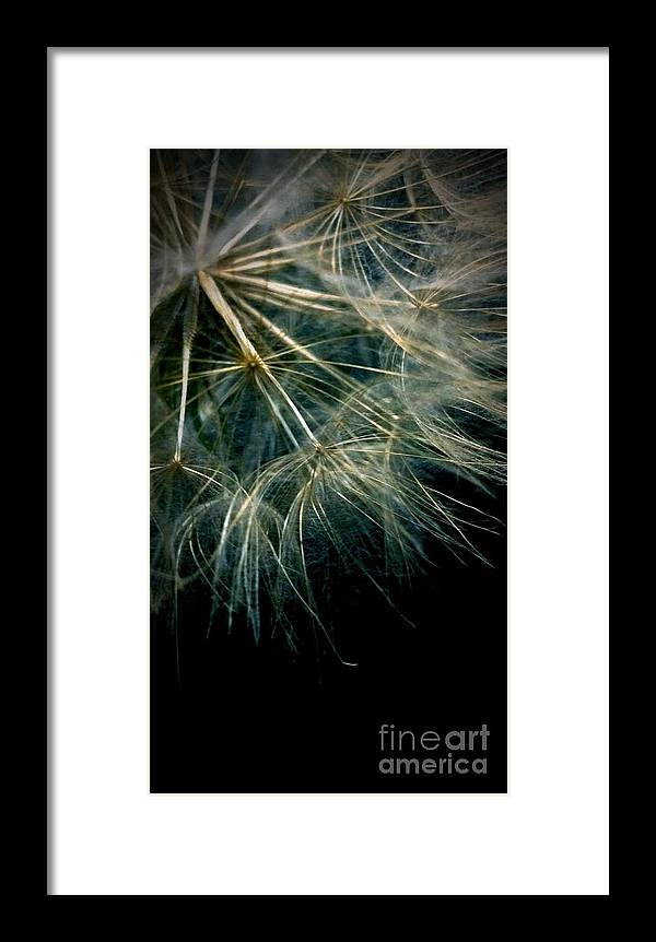 Dandelion Framed Print featuring the photograph Dandelion Thirty Seven by LKB Art and Photography