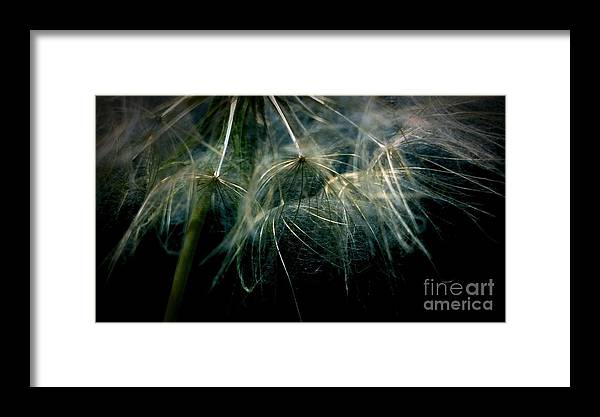 Dandelion Framed Print featuring the photograph Dandelion Thirty Two by LKB Art and Photography