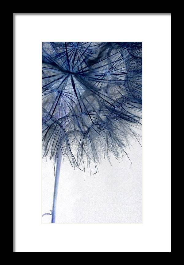 Dandelion Framed Print featuring the photograph Dandelion Twenty Five by LKB Art and Photography