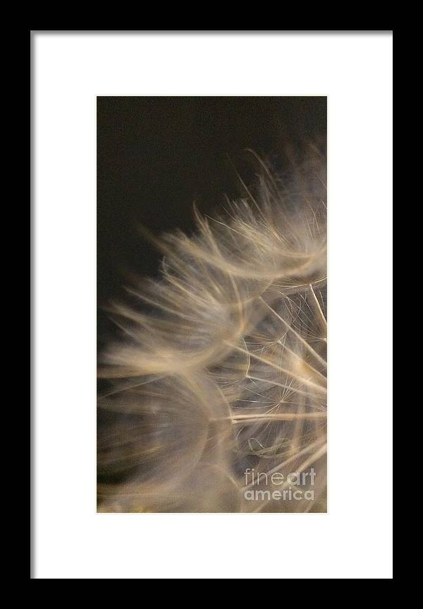 Dandelion Framed Print featuring the photograph Dandelion Twenty by LKB Art and Photography
