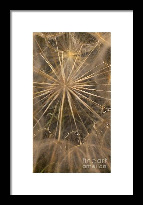 Dandelion Framed Print featuring the photograph Dandelion Twenty One by LKB Art and Photography