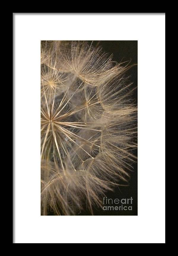 Dandelion Framed Print featuring the photograph Dandelion Twenty Two by LKB Art and Photography