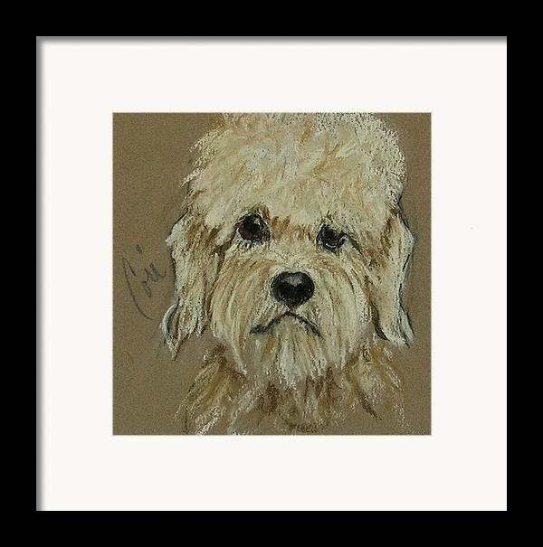 Dandie Dinmont Terrier Framed Print featuring the drawing Dandie by Cori Solomon