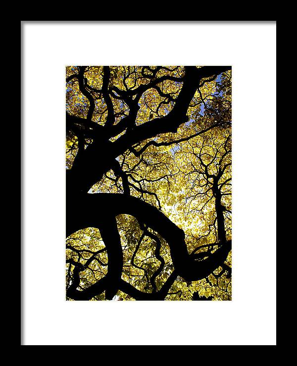 Fall Season Framed Print featuring the photograph Dangerous Curves by Sonja Anderson