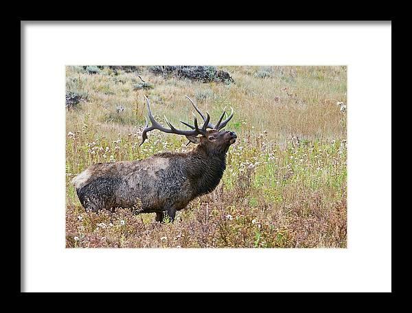 Colorado Framed Print featuring the photograph Dapper Dan by Gary Lengyel