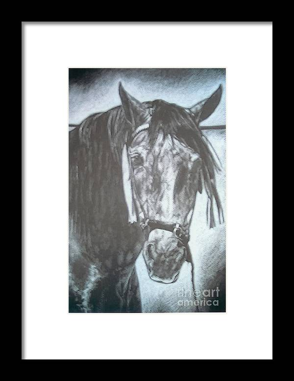 Horse Framed Print featuring the drawing Dapple Andalusian by Jennifer Bonset