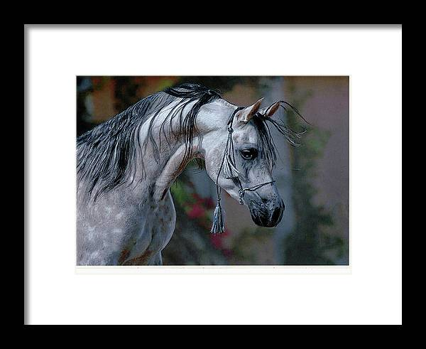 Horse Framed Print featuring the drawing Dappled Grey by Paul Archer