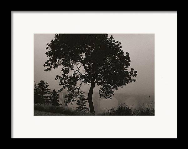 Elm Framed Print featuring the photograph Dark Elm By River by Arnold Isbister