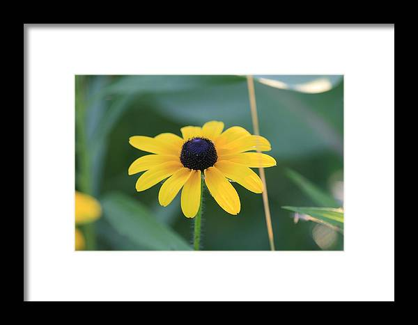 Wild Flowers Framed Print featuring the photograph Dark Eye by Alan Rutherford