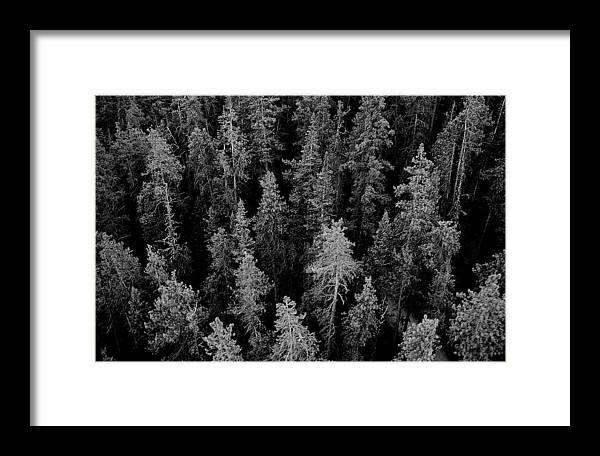 Forest Framed Print featuring the photograph Dark Forest by Caroline Clark