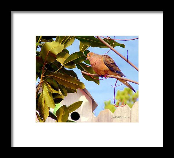 Birds Framed Print featuring the photograph Darling Dove by Patricia L Davidson