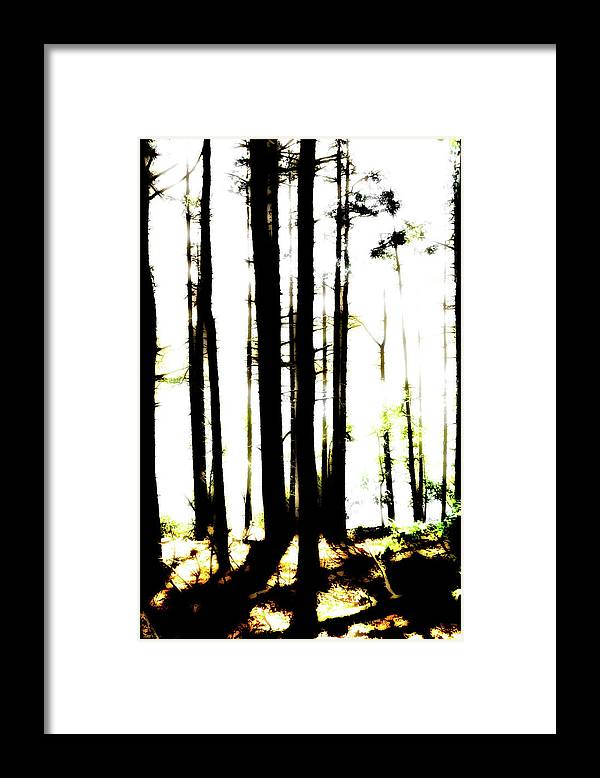 Bright Framed Print featuring the photograph Dawn in the woods by Corey O'Hara