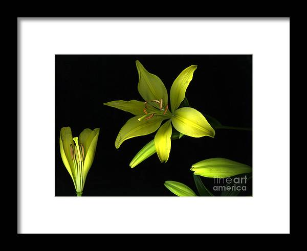 Scanography Framed Print featuring the photograph Day And Night by Christian Slanec