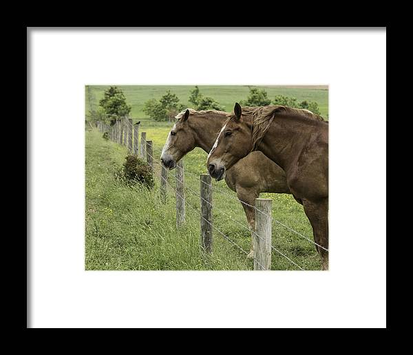 Horses Framed Print featuring the photograph Day Dreamers by Elizabeth Eldridge