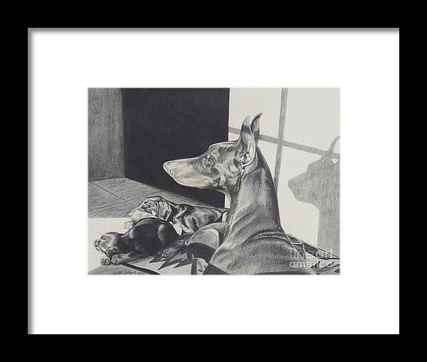 Doberman Framed Print featuring the drawing Day Dreams by Cynthia Riley