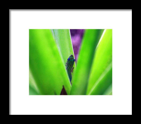 Gecko Framed Print featuring the photograph Day Gecko And Pineapple Plant by Jennifer Bright