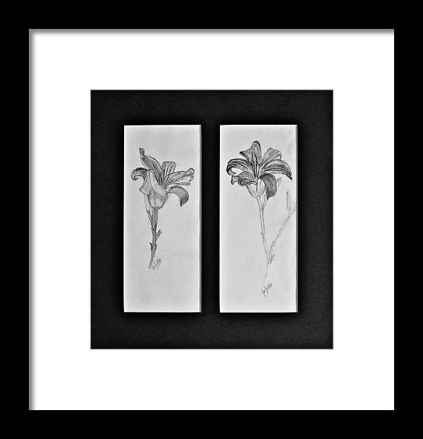 Pencil Sketches Framed Print featuring the drawing Day lilies by Peggy King
