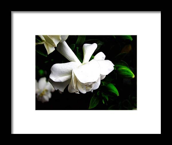Framed Print featuring the photograph Day Lillie by Jeremy Owens