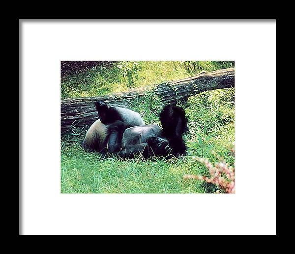 Animals Framed Print featuring the photograph Daydream Believer by Jan Amiss Photography