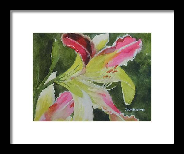Daylily Framed Print featuring the painting Daylily Study 1 by Jean Blackmer