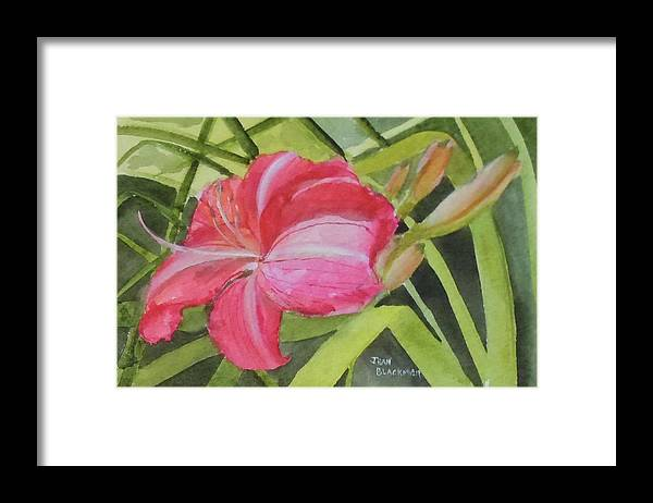 Daylily Framed Print featuring the painting Daylily Study II by Jean Blackmer
