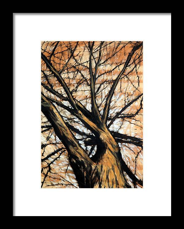 Tree Framed Print featuring the drawing Dead Elm by John Terwilliger