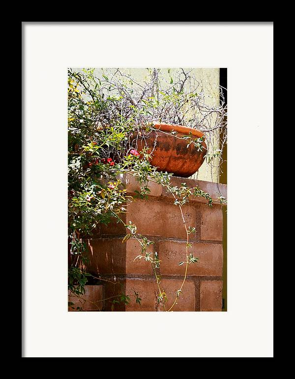 Brick Framed Print featuring the photograph Dead Or Alive by Bob Gardner