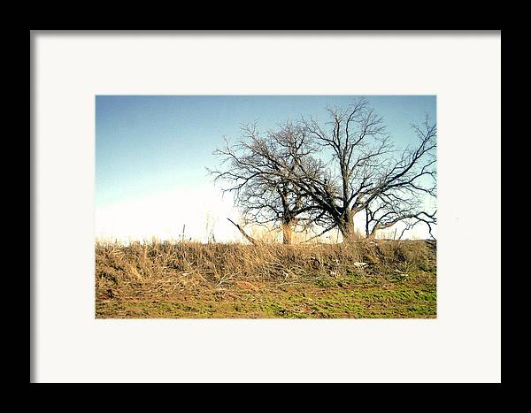Framed Print featuring the photograph Dead Tree by Chad Taber