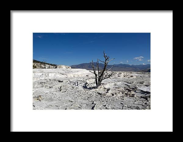 Tree Framed Print featuring the photograph Dead Tree In Yellowstone Park Hot Springs by Thomas Baker