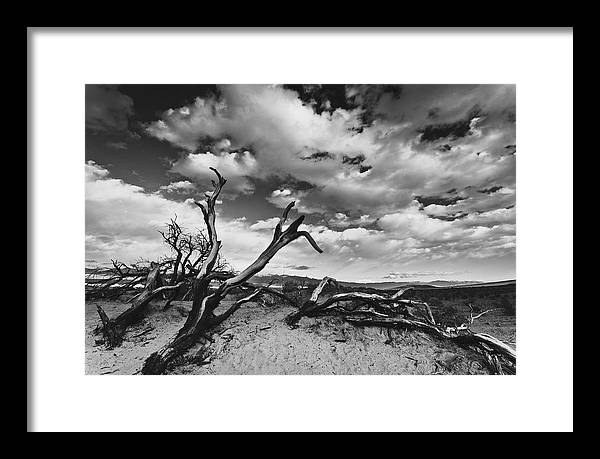 Landscape Framed Print featuring the photograph Dead Trees at Mesquite Dunes by Nathan Spotts