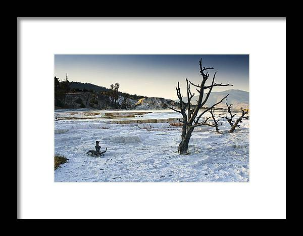 Mammoth Hot Springs Framed Print featuring the photograph Dead Wood Springs by Chad Davis