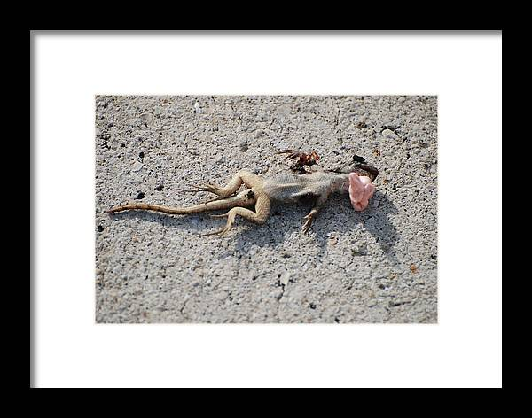 Lizards Framed Print featuring the photograph Death By Gum by Rob Hans