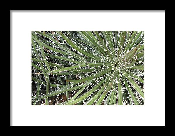 Nature Framed Print featuring the photograph Decorations by Munir Alawi
