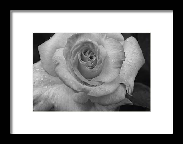 Flower Framed Print featuring the photograph Deep And Wet by Sonja Anderson