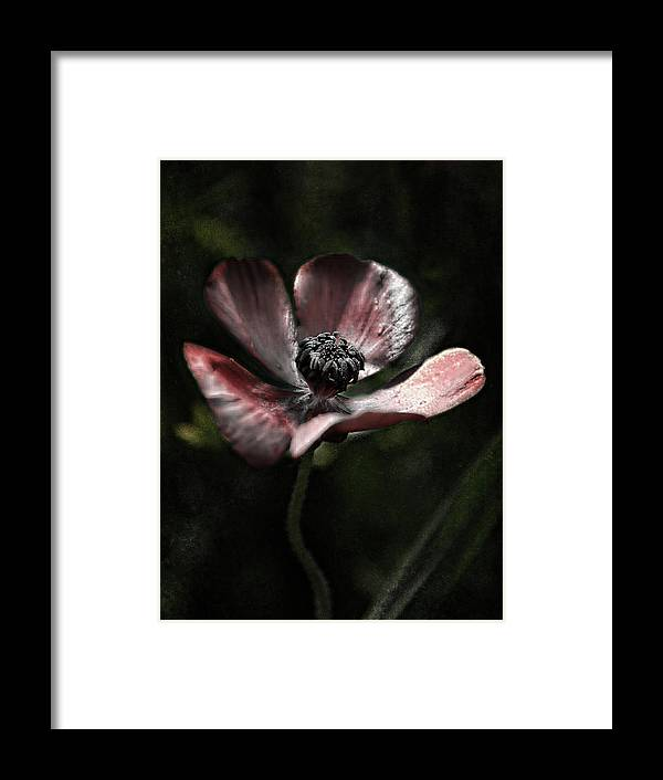Flowering Bulbs Framed Print featuring the photograph Deep Bordeaux by Heather Thorning