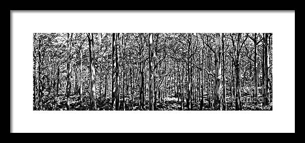 Boranup Forest Framed Print featuring the photograph Deep Forest Bw by Az Jackson