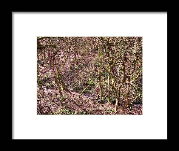 Abstract Framed Print featuring the photograph Deep In Woods by Svetlana Sewell