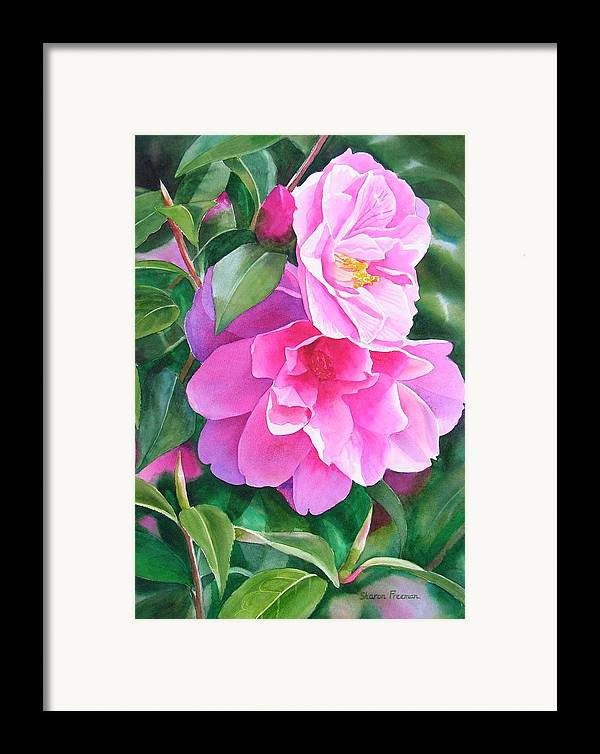 Pink Flower Framed Print featuring the painting Deep Pink Camellias by Sharon Freeman