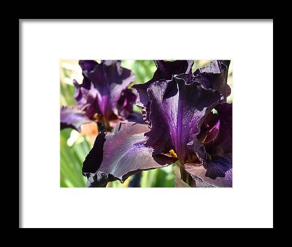 �irises Artwork� Framed Print featuring the photograph Deep Purple Irises Dark Purple Irises Summer Garden Art Prints by Baslee Troutman