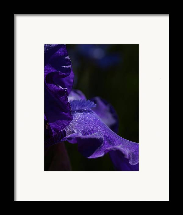 Macrophotography Framed Print featuring the photograph Deep Sparkling Iris by Joyce Hutchinson
