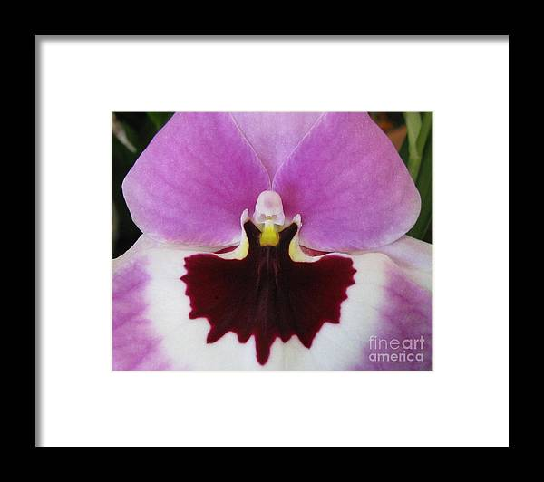 Flower Framed Print featuring the photograph Deepening by Tina Marie