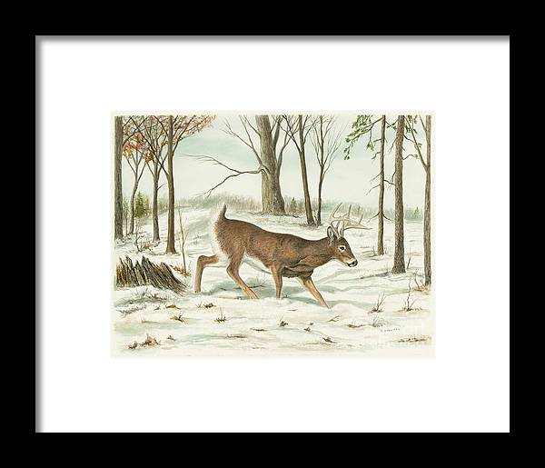 Deer Framed Print featuring the painting Deer In Snow by Samuel Showman
