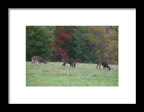 Deer Framed Print featuring the photograph Deer In The Fall by James Jones