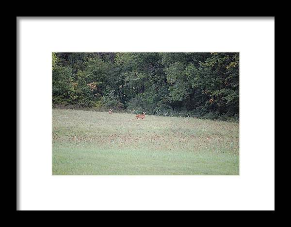 Wildlife Framed Print featuring the photograph Deer Looking Up Towards Me by Richard Botts