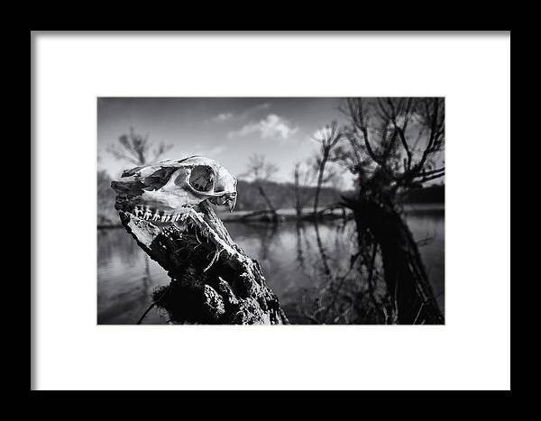Bucks County Framed Print featuring the photograph Deer Skull by David Oakill