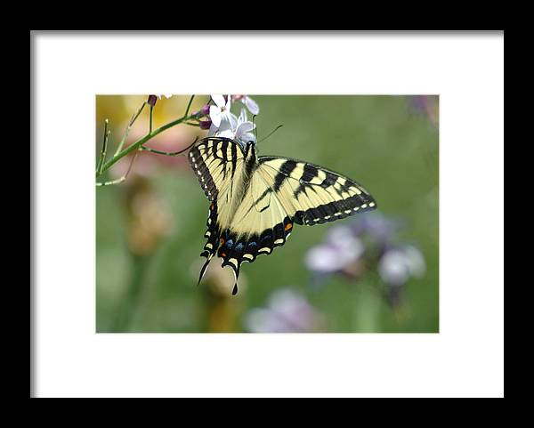 Butterfly Framed Print featuring the photograph Delicate Balance by Linda Murphy