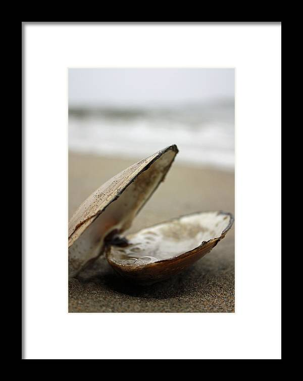 Beach Framed Print featuring the photograph Delicate by Becca Brann