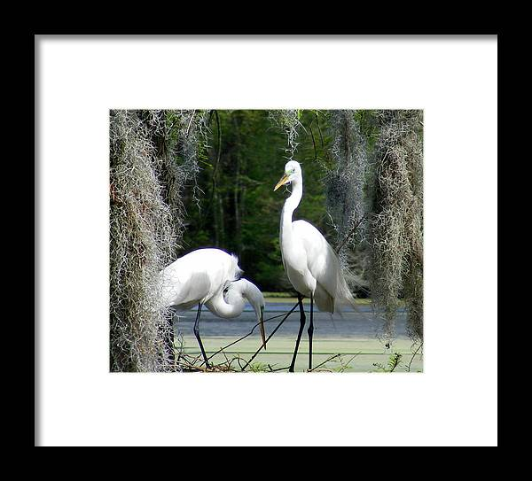 White Egrets Framed Print featuring the photograph Delicate Egret Romance by Elena Tudor